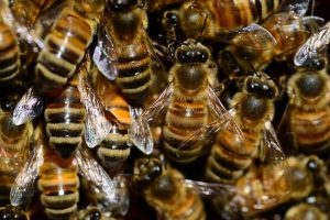 Bees working together in Essex County